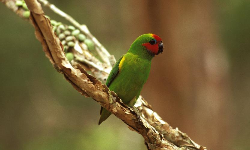 Biodiversity bond plants seed for engagement